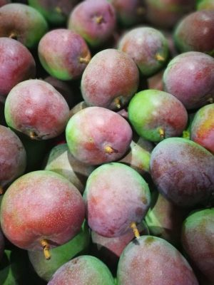 Australian Mango – Sweet Fruit from Khanh Hoa