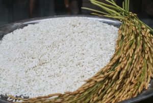 An Giang Glutinous Rice